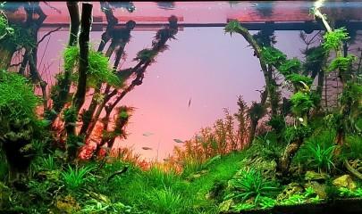 Правильный уход за природным аквариумом. Советы профессионалов