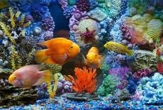 Как выбрать задний фон для аквариума