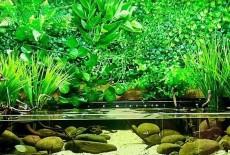 Как создать красивый аквариум травник