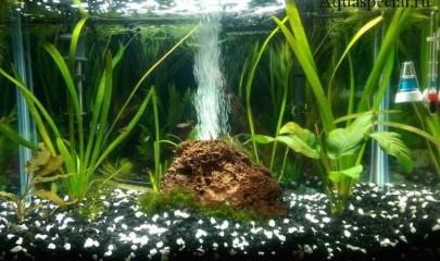 Аэрация в аквариуме: подробная инструкция для новичков