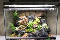 Как отличить аквариум от террариума