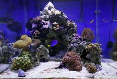 Важность показателя солености воды в морском аквариуме