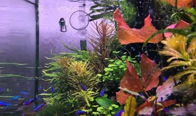 Микро и макро удобрения: невидимые помощники акваскейперов
