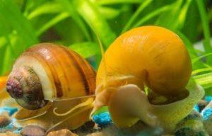 Как избавиться от водорослей в аквариуме: правила и советы от вредоносного озеленения