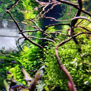 удобрения для аквариума