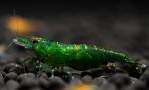 Зеленый нефрит (Green-Jade)