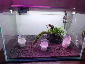 запуск аквариума
