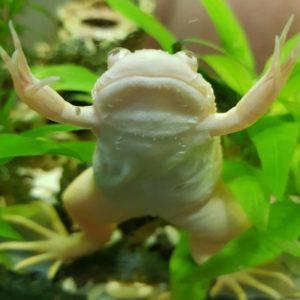 Жизнь лягушук