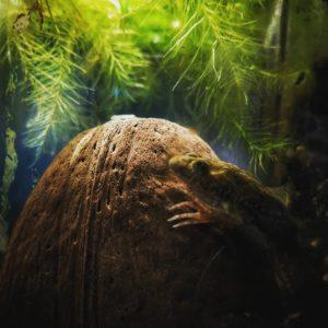 Лягушка на камне