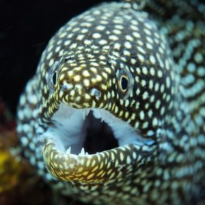 мурена в аквариуме