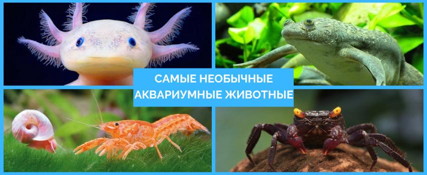 Самые необычные аквариумные животные