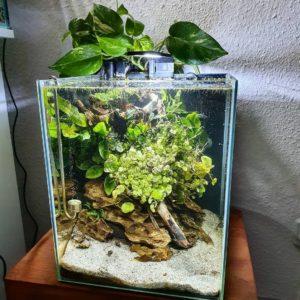 травник аквариум 100 литров и 50 литров