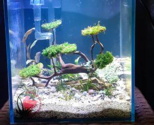 аквариумы травники