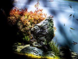 Рыбки и растения для аквариума