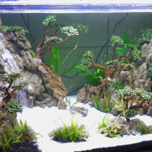 аквариум травник для начинающих с нуля
