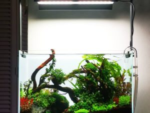 травник аквариум пошаговая инструкция