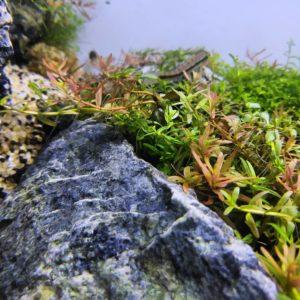 аквариум гербник
