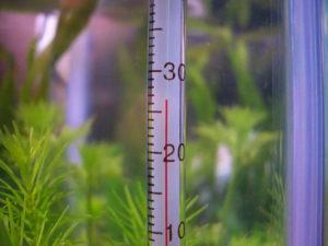 Температура воды для Амбулии