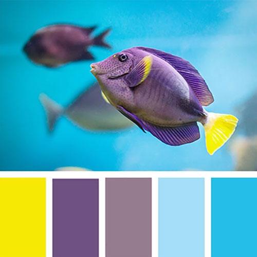Цветовая палитра для отделки аквариума