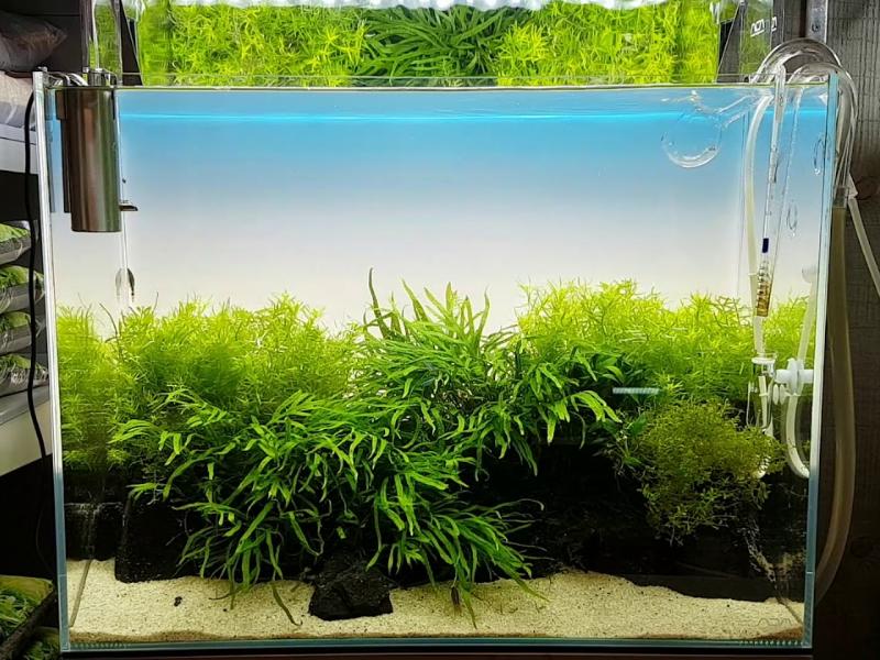ADA - Light Screen в аквариуме