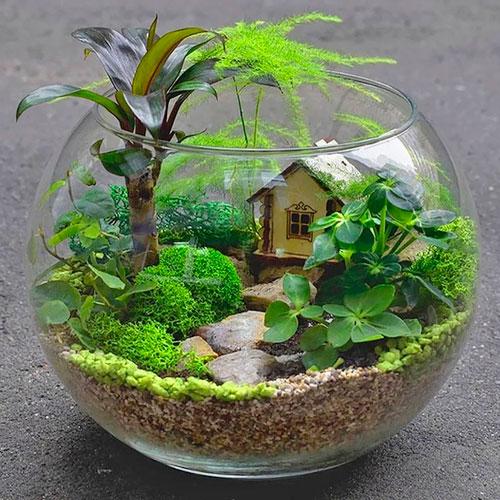 Флорариум в аквариуме, идеи для пустого аквариума
