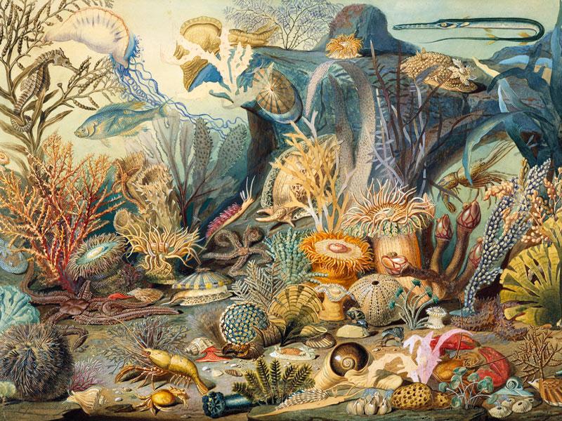 Функция фона для аквариума