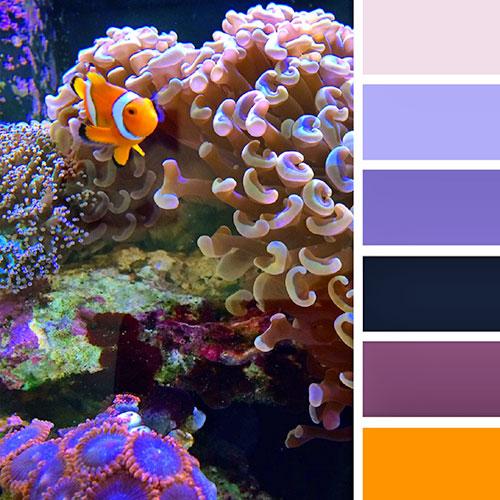 Гамма цветов для отделки аквариума