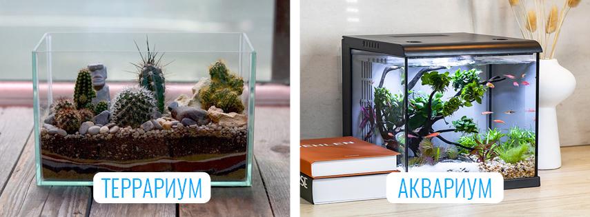 Отличия террариума от аквариума