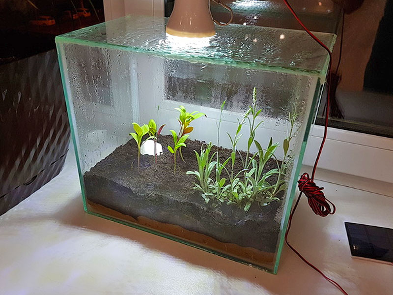 Парник из старого аквариума