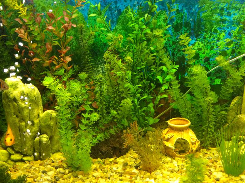 Растения как фон в аквариуме