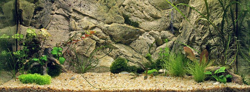 Рельефный фон для аквариума 3d