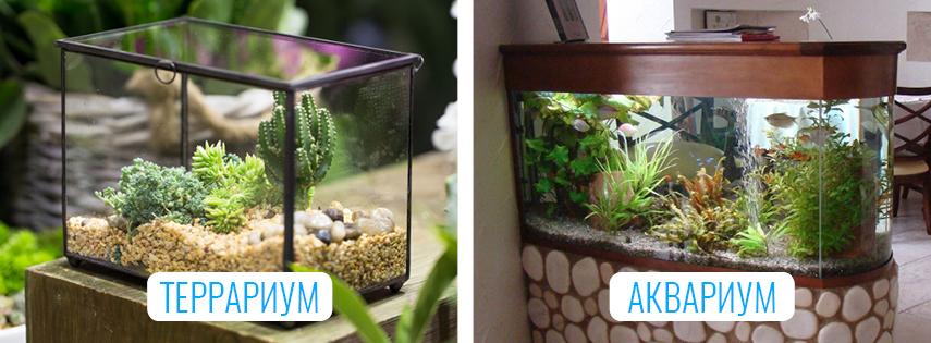 Сходства между террариумом и аквариумом