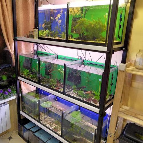 Стеллаж для аквариумов в квартире