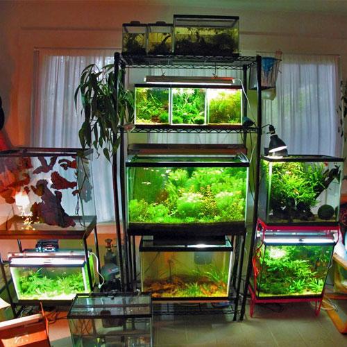 Стеллаж для аквариумов