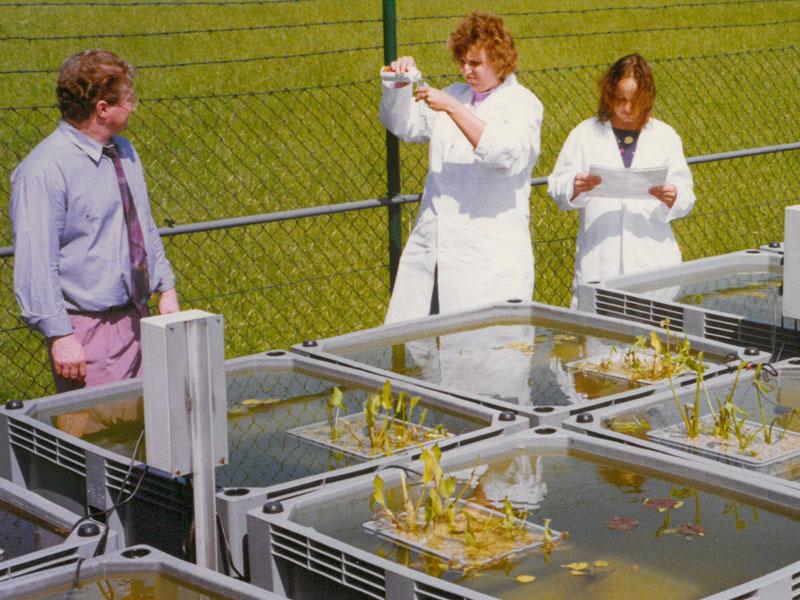 Изобретение инновационного корма Pond Sticks